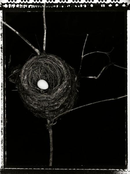 PardingtonFbird nest.jpg